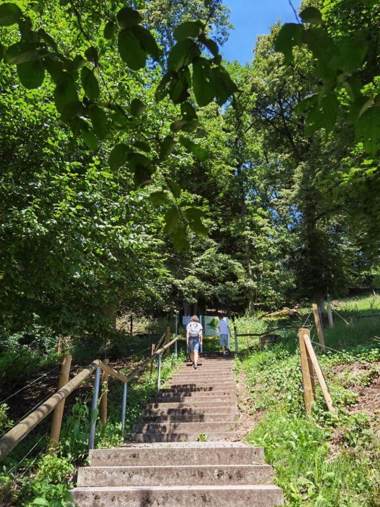 Richtung Walhalla wandern: 168 Stufen von der Donau durch den Wald